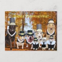 Customizable Funny Pilgrim Dogs Thanksgiving Post Holiday Postcard