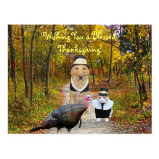 Customizable Funny Thanksgiving Postcard