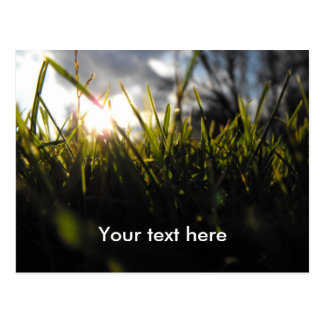 Customizable Grass Postcard