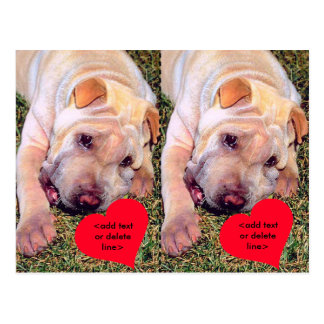 Customizable Happy Valentine's Day Chinese SharPei Postcard