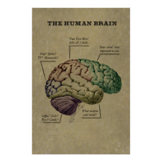 Customizable Human Brain Poster, edit the 5 labels Poster