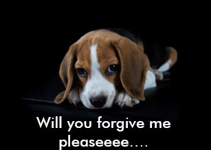 Cute sorry puppy cards greeting photo cards zazzle customizable im sorry card cute beagle puppy voltagebd Images