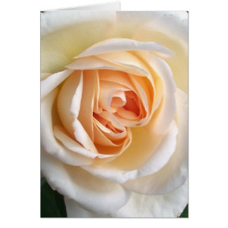 Customizable Ivory White Rose Greeting Card