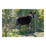 Customizable Okapi Poster