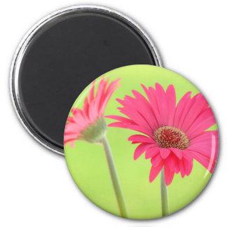 Customizable Pink Gerber Daisies on Green Magnet