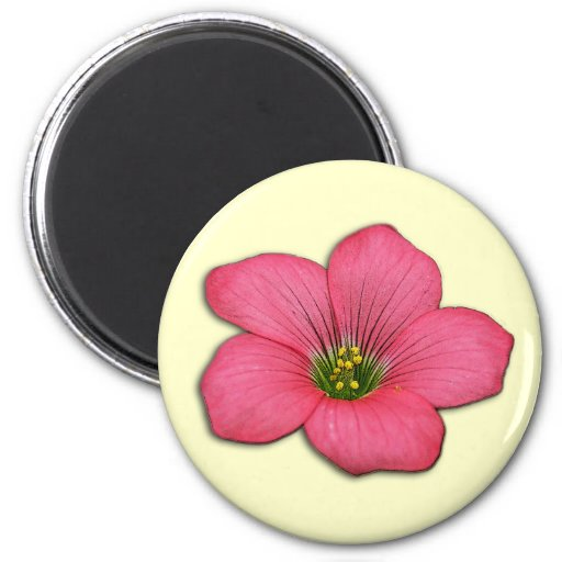 Customizable Pink Oxalis Blossom Magnet