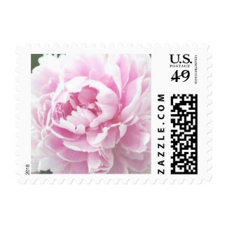 Customizable Pink Peony Floral Postage Stamps