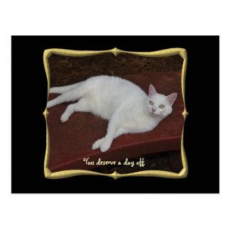 Customizable Pretty Cat Postcard