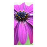 Customizable Purple Daisy Rack Card Template