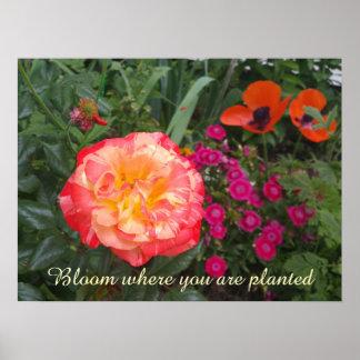 Customizable Rose Garden Photo Poster