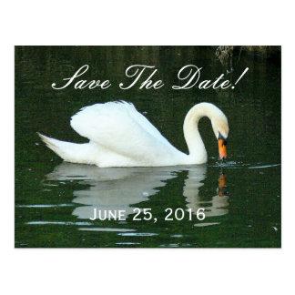 "CUSTOMIZABLE ""SAVE THE DATE"" POSTCARD /WHITE SWAN"