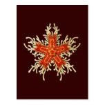 Customizable Vintage Haeckel Postcard