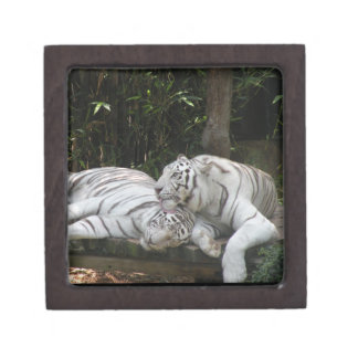 Customizable White Tigers Gift Box