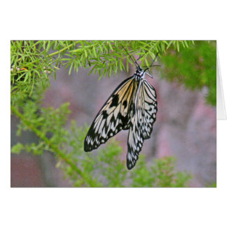 CUSTOMIZBLE NOTECARD/BUTTERFLY ON STEM CARD