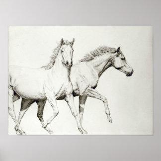 Customize a Horse Poster