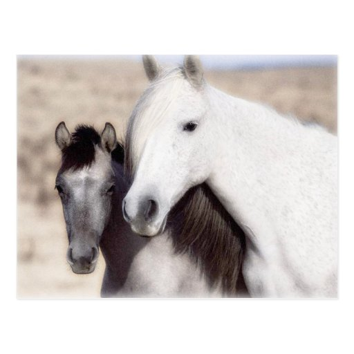 Customize Horse Party Invitations and Cards Postcard