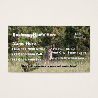 (Customize) Nice Coyote photo in Yellowstone Business Card