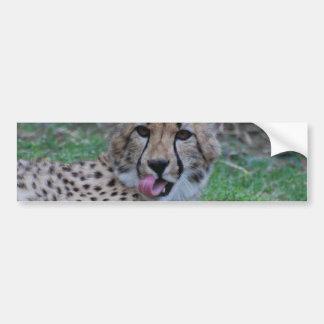 Customize Product Car Bumper Sticker