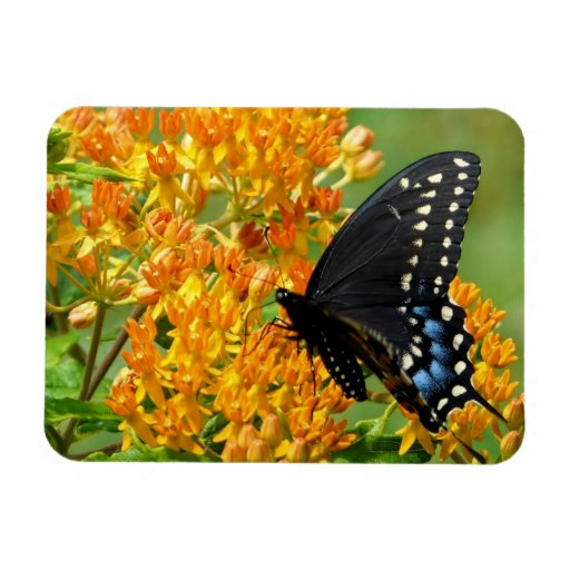 Customize Product - Customized Rectangle Magnets