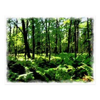 """Customize Product""""Ferny Forest"""" Postcard"""