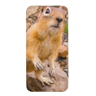 Customize Product iPhone 5 Pouch