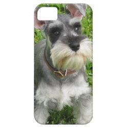 Case-Mate Vibe iPhone 5 Case with Miniature Schnauzer Phone Cases design