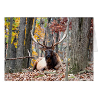 Customize Product Nice Photo of a Bull Elk resting Greeting Card