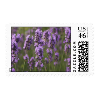 Customize Product Postage Stamp