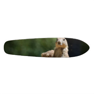 Customize Product Skate Board Deck