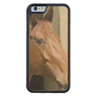 Customize Product Carved® Maple iPhone 6 Bumper Case