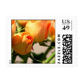 Customize Your Postage Orange Rose Square Size