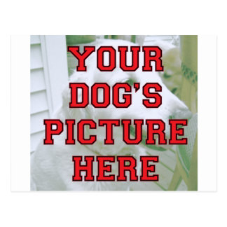 Customized Your Dog's Photo Postcards