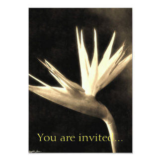 Cut Bird of Paradise Flowers 3 Antiqued Card