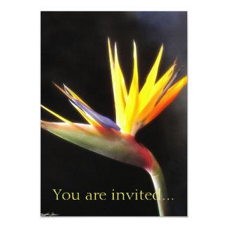 Cut Bird of Paradise Flowers 3 Card