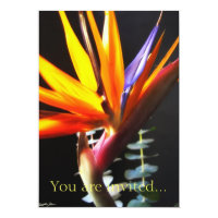 Cut Bird of Paradise Flowers 4 Card