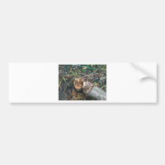 Cut Down Plum Tree Bumper Stickers