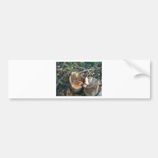 Cut Down Plum Tree Car Bumper Sticker