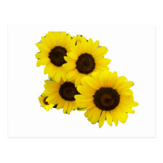 Cut Out Sunflowers Postcard