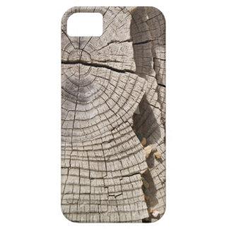 Cut wood cross-section texture iPhone SE/5/5s case