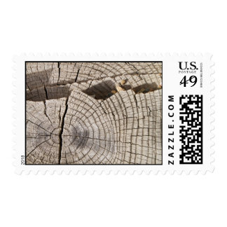 Cut wood cross-section texture Postage