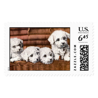 cute 4 fluffy puppies stamp postage