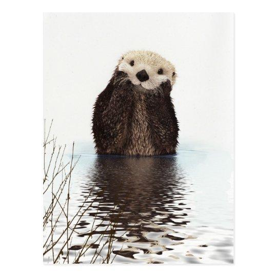 Cute Adorable Fluffy Otter Animal Postcard Zazzle Com