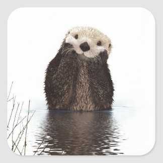 Cute adorable fluffy otter animal square sticker