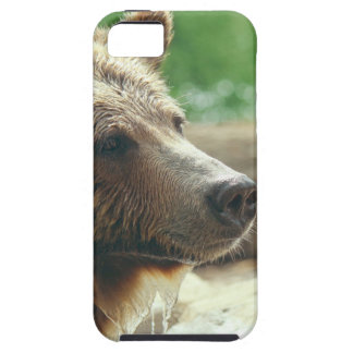 Cute Adorable Nature Bear Animal Face Eyes iPhone 5 Case