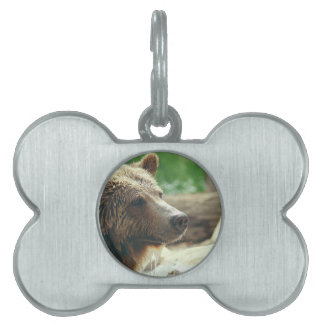 Cute Adorable Nature Bear Animal Face Eyes Pet ID Tag