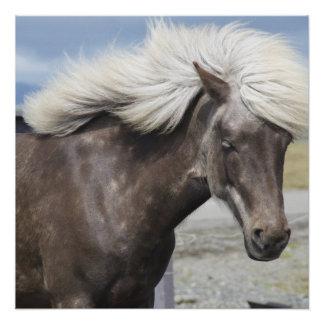 Cute Adorable Pony Animal Horse Pet Grace Destiny Poster