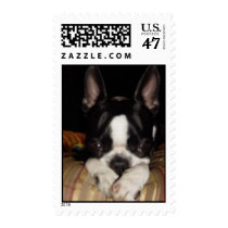 cute adorable puppy dog boston terrier postage