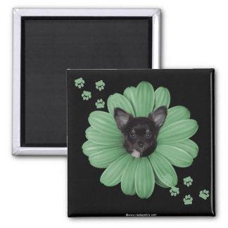 Cute Adorable Sly Heaven Chihuahua Magnet