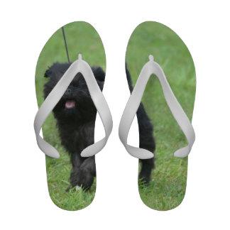 Cute Affenpinscher Dog Flip-Flops