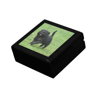 Cute Affenpinscher Dog Keepsake Box